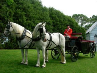 royal-horses-at-wedding